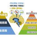 人間の脳の構造とマズローの5段階欲求を理解することで、本物のコミュニケーションの基礎がわかる。