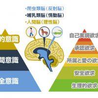 人間の脳の構造とマズローの5段階欲求を理解する